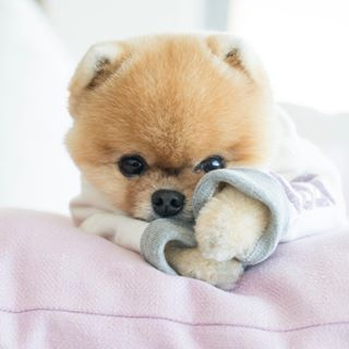 Image May Contain Dog In 2020 Cute Little Puppies Cute Fluffy Dogs Cute Dogs And Puppies