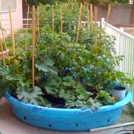 Baby pool gardens and okra on pinterest for Self sustaining pool