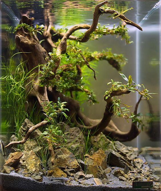aquarium roots photo editor online photo editor betta fish tanks ...