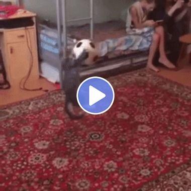O gato defendeu a bola com estilo