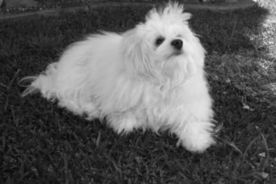 Our little Millie: After losing our 12 1/2 year old Maltese from kidney failure, I said no more dogs. We were devastated, but 7 months later I just new I had to have another