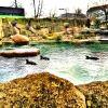 Zoo Dresden Pinguine