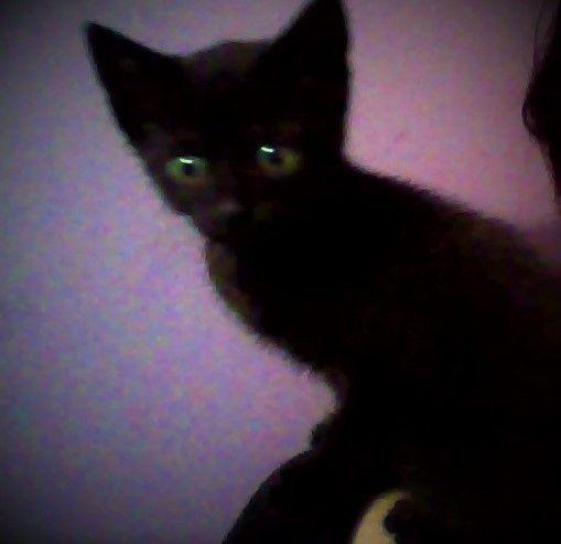 dis is Marceline, my 7 week old kitten <3 <3