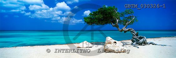 Tom Mackie, LANDSCAPES, panoramic, photos, Divi Divi Tree, Aruba, Lesser Antilles, Caribbean, GBTM030326-1,#L#