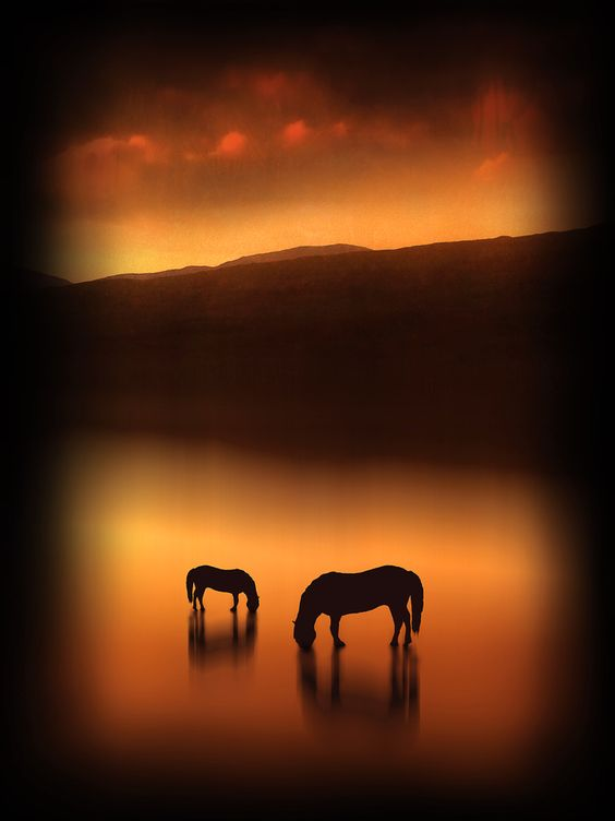 The Horses at Sunset by Jenny Woodward, via 500px
