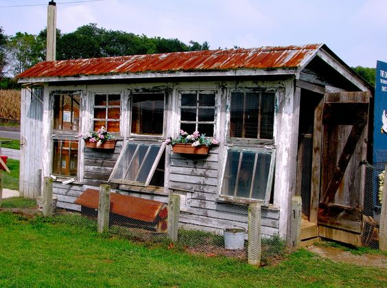 Awesome Coop White Washed Wood Window Boxes Tin Roof