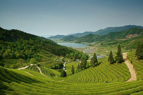 Vùng đất Jeollanam được biết đến là địa danh xanh nhất ở Hàn Quốc