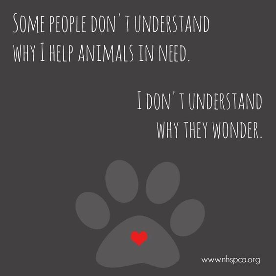 Some people don't understand why I help animals in need. I don't understand why they wonder ...                                                                                                                                                                                 More: