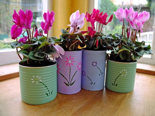 Upcycled food cans filled with plants!