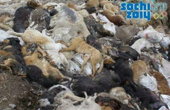 2014 Olympics killing stray dogs for  the Olympics. No fair . I hate the Olympics.