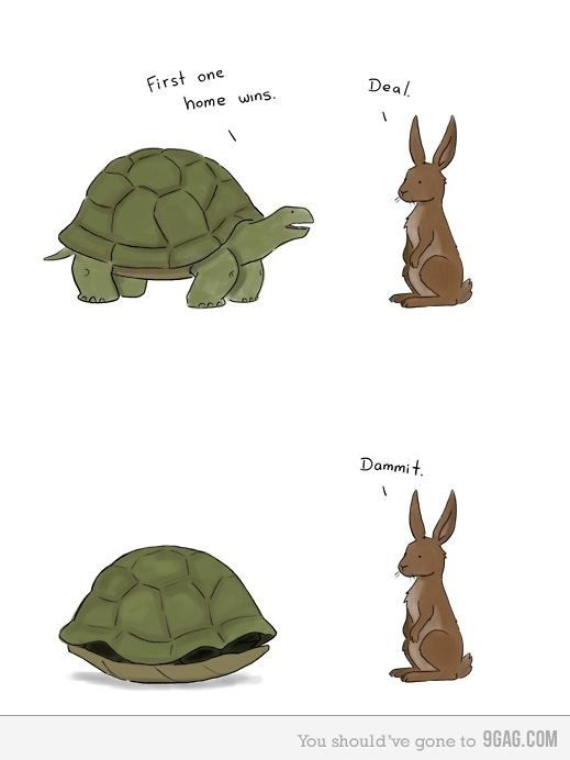 Le lapin et la tortue: Funny Animals, Turtle Wins, Giggle, Funny Things, Funny Pictures, Troll Turtle, Funny Stuff, Vs Hare