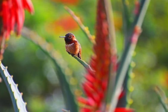 Hummer At Rest by Lynn Bauer