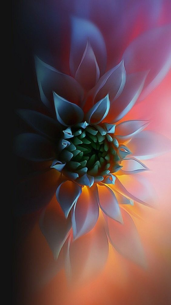 Musa Akkaya Duvar Kagidi Flower Wallpaper Iphone Backgrounds Tumblr Colorful Wallpaper