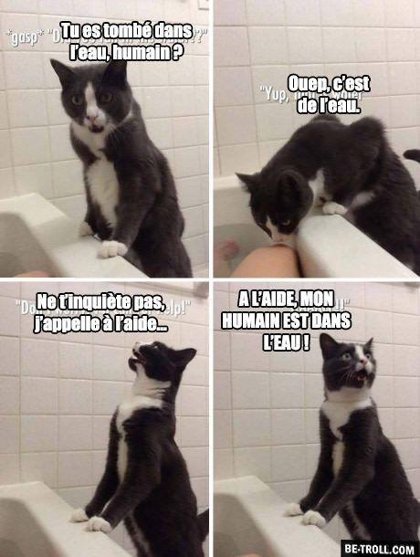 Images Droles Francais Les Chats Et L Eau Humour Animaux Chat Drole Animaux Droles