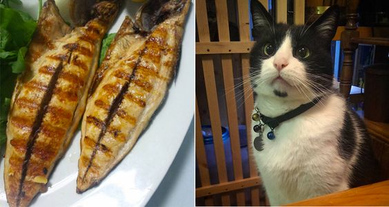 One Japanese cat cafe has created a line of snacks—including grilled bonito and dried mackerel furikake—that cats and humans can munch on together.