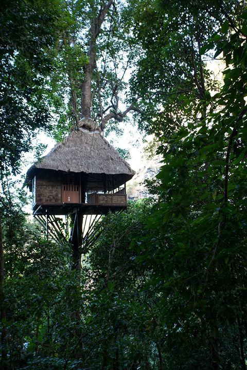 Take your love of unique holiday destinations to new heights! #travel #holidays #hotel #nature #tree