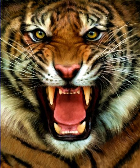Image Result For Angry Tiger Hd Images