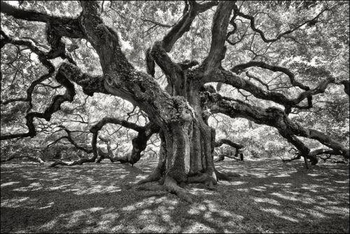 angel oak by jody9 on Flickr.