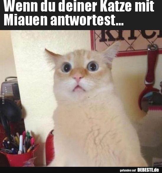 Wenn Du Deiner Katze Mit Miauen Antwortest With Images Cats