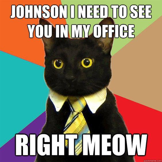 why do I love cat jokes so much? I'm already a cat lady..great