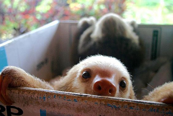 One of my goals in life is to hold a baby sloth!!!!!!!!!!!!!!!!!!!!!!!!!!!!!!!!!!!!!!!!!!!!!!!!!!!!!!!!!!!!!!!!!!!!!