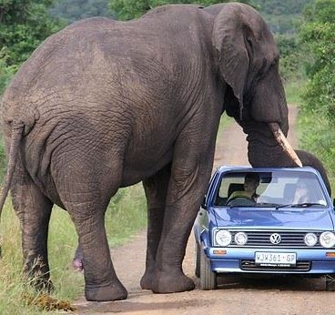 Ummmm, yeah!  Could you please remove your trunk so we can move along now?  Pretty please?  I mean, only if you WANT to , of course...