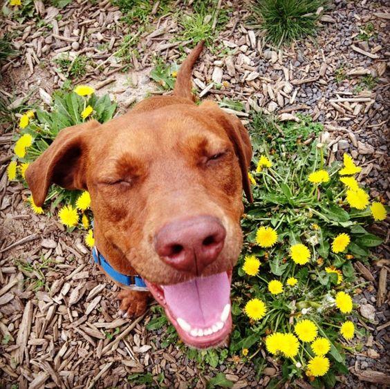 Blissed out at Hazelia Field Dog Park - Lake Oswego, OR - Angus Off-Leash #dogs #puppies #cutedogs #dogparks #lakeoswego #oregon #angusoffleash:
