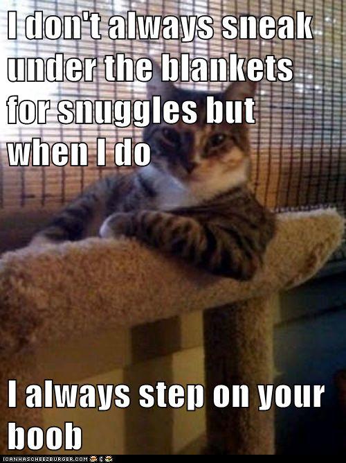 silly kitties!