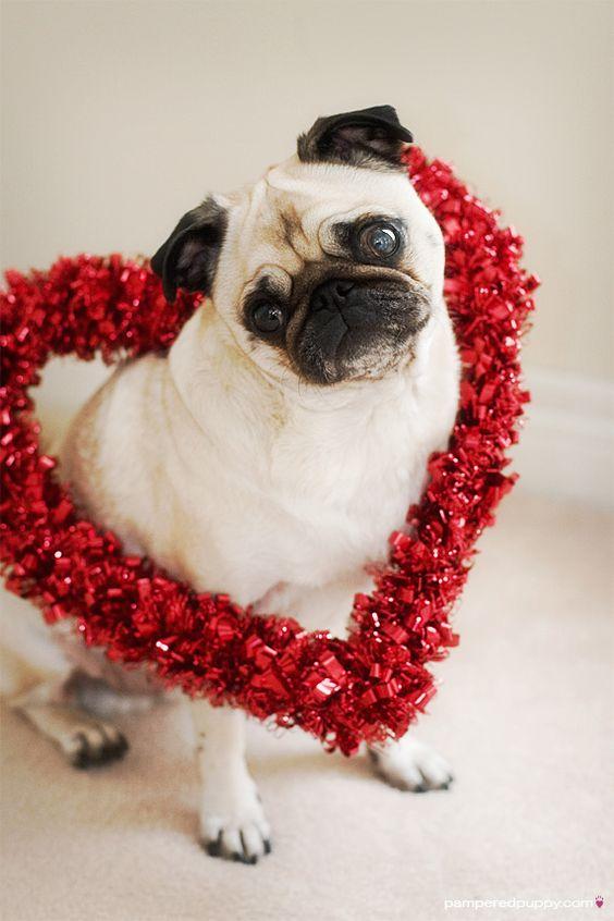 happy valentine day youtube