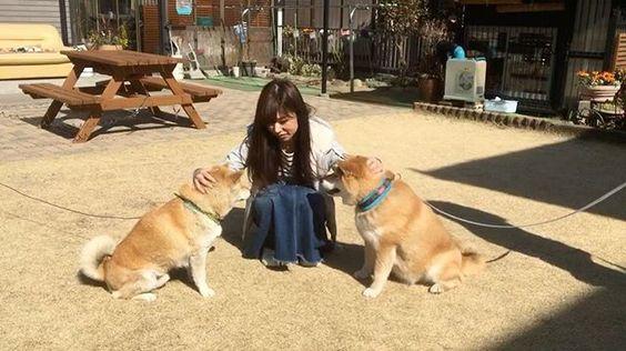🐶👩🏻🐶 もふもふしあわせ 柴サンド しかもたろとまる まるはほんとにやさしいいいこ @marutaro #まるとたろ #柴犬まる #shiba#shibainu#柴#柴犬 by mayuu_taro