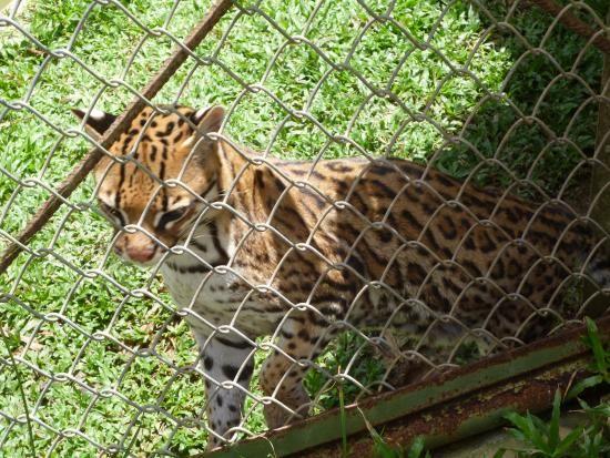 fotos de animales del parque natural de ucayali | En el Parque Natural: fotografía de Parque Natural de Pucallpa ...