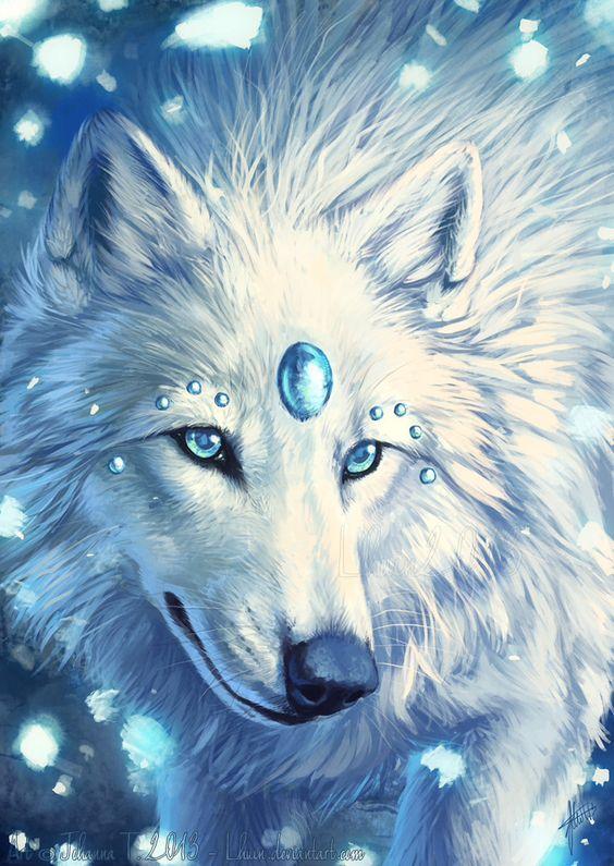 beautiful blue white wolf - photo #33
