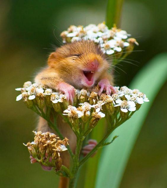 La joie de vivre au milieu du pollen - Andrea Zampatti/Comedy Wildlife Photography