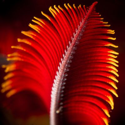 Frond Close-Up: Shawn Miller