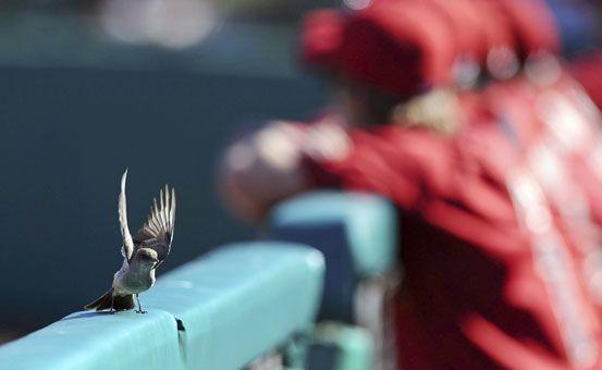 Baseball fan!