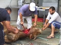 Petition · Bundestag - Petitions Committee: Animal protection against religion: Against the allowable slaughtering · Change.org