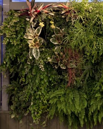 """Transform+walls+both+indoors+and+outdoors+into+vertical+gardens+using+a+new+concept+in+container+planting+called+""""woolly+pockets."""""""
