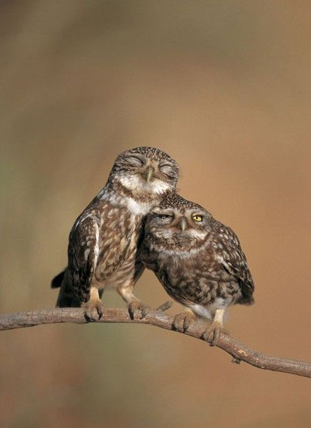 QUe rico es tener tiempo de no ver a alguien querido y cuando la ves abrazarse ... mmmmmmmmmmmmmmm !!!!!!!!!!!!!!!