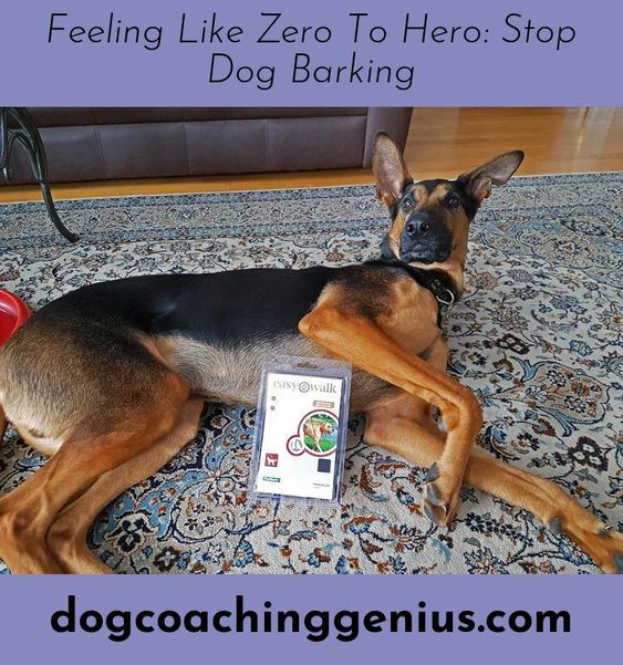 Discover More About Dog Aggression Training Aggressive Dog Stop Dog Barking Dogs
