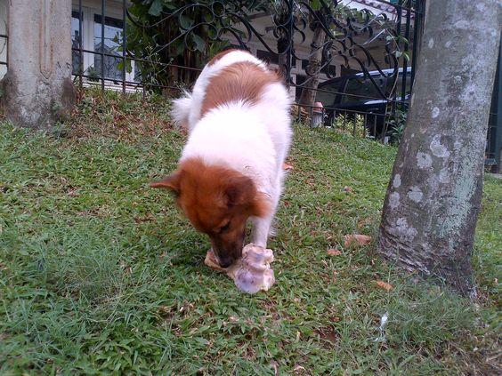 eat that! dog