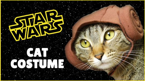 How to make cute cat Star Wars Princess Leia costume! In this DIY tutorial i show how i made Princess Leia hair buns hoodie for my cat Cookie. This costume will also fit small dogs and stuffed animals.  i made this cat costume using a sewing machine but you can easily hand stitch or even glue it with a fabric glue.