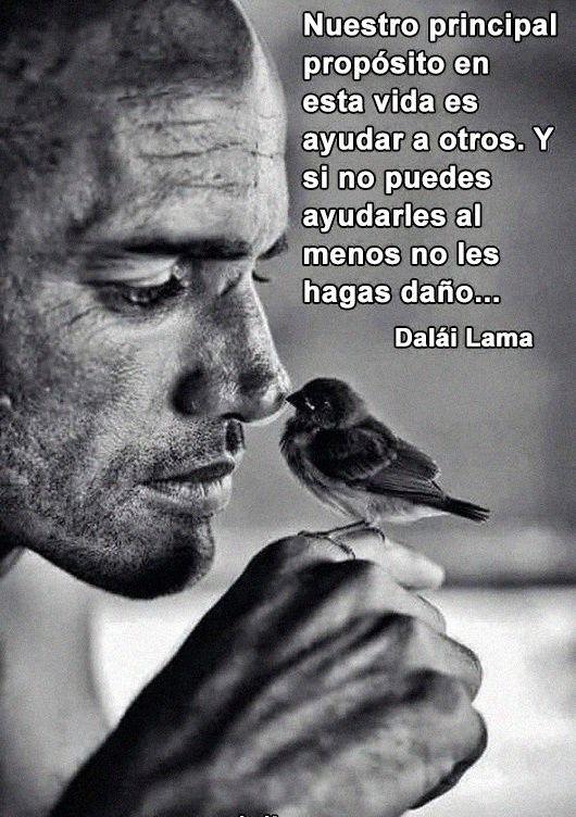 Nuestro principal propósito en esta vida es ayudar a otros. Y si no puedes ayudarles al menos no les hagas daño. #DalaiLama.