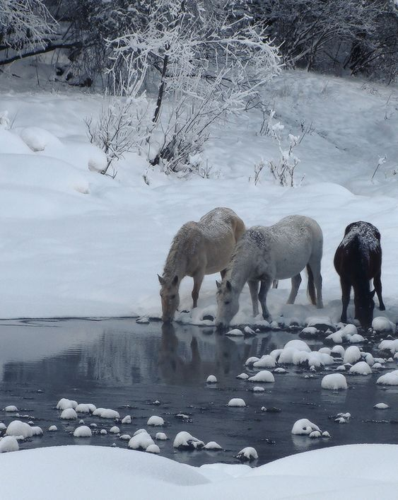 Horses in Winter.: