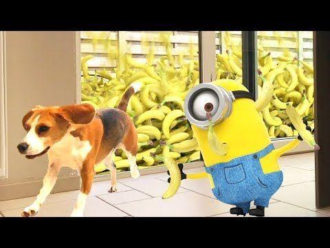 World Of Pets Videos Minionen Im Echten Leben Regenbanan Dogs Dogs Echten Lebenquot Pets Quo Rescue Dog Quotes Dog Walking Quotes Diy Dog Run