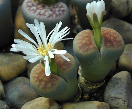 25 Nombres De Plantas Del Desierto Lista Características Y Fotos Plantas Suculentas Suculentas Cuidado De Cactus