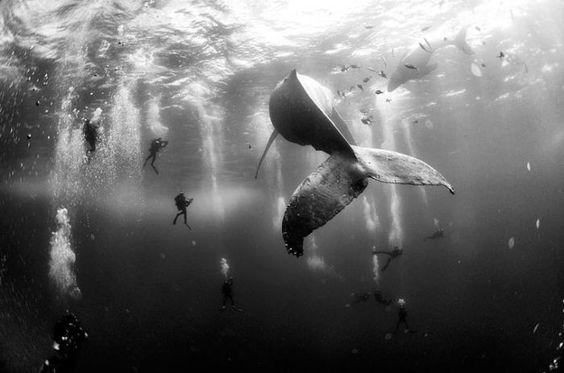 Наблюдение за повадками семьи китов.