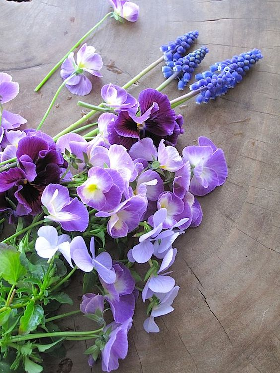 My garden : photo by Mari Mochizuki スタジオの小さな庭の花たち