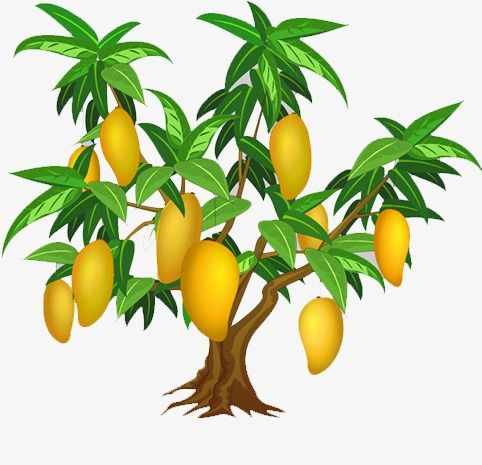 Mango Tree Mango Clipart Tree Clipart Png Transparent Clipart Image And Psd File For Free Download Mango Tree Mango Tree Images Tree Drawing