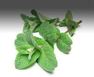Gypsy Magic: Peppermint Healing Spell