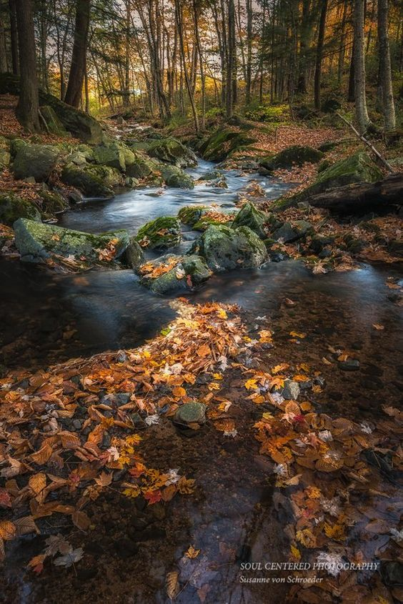 A favorite creek in my neighborhood, in the Blue Hills of northern Wisconsin. I liked the way the leaves are pointing towards the creek. TITLE: Magical Creek with leaves, Fall This listing is for a 8x12 print for $30.00 or a 12x18 print for $65.00. Please choose the size you